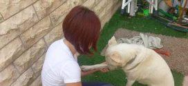 Пансион для собак у Марины